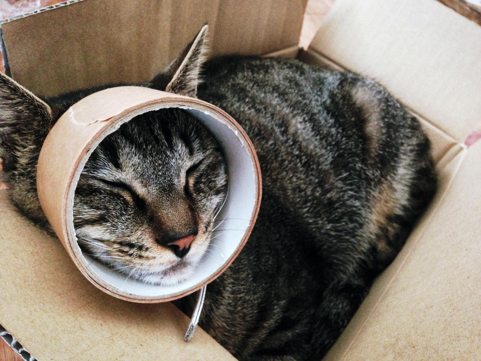 猫とガムテープ